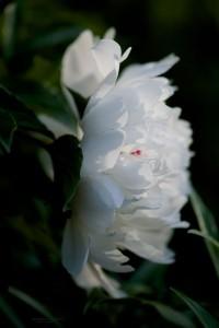 flower d (1)