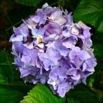 gerdes flower 3