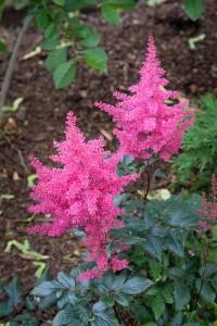 muldoon flower 4
