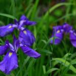 flower w