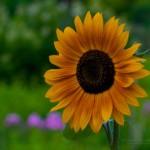 flower z
