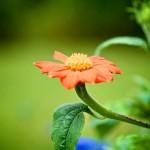flower z10.